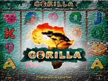 Gorillа